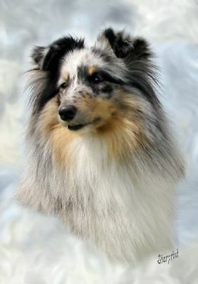 Shetland Sheepdog/Sheltie A6 Blank Card No 6 Starprint