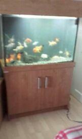 3ft fish tank set up