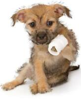 Pet First Aid & Disaster Planning