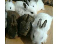 6 month old rabbits