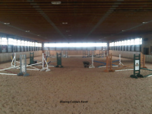 Looking for barn help/ working student