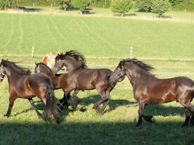 WANT Equestrian Farm, yard, smallholding, house/caravan with stables