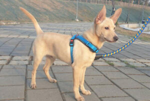 4 month affectionate puppy for adoption!