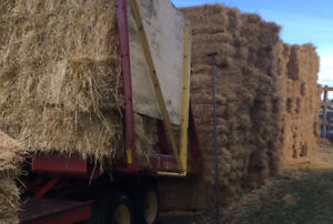 Small Square Wheat Straw for Sale