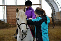 Cheap Riding Lessons / Horse Exersicising in NS