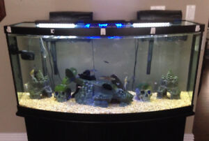 Aquarium 72 Gallon Bow Front