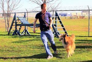 DOG BOARDING, Dog Grooming, DELIVERY at... MANOIR KANISHA
