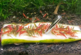 Tropical shrimps and plants for sale