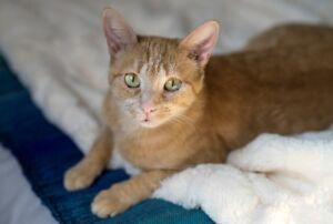 """""""Zulu"""" - SNKI rescues available for adoption"""