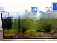 Large bunch of guppies waiting for a new home