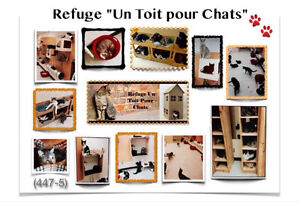 (447-5)  ADOPTION CHATS / CHATONS .. LAVAL