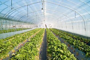 Green house wanted for long term lease