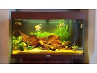 Juwel Rio 125l Aquarium for sale, with additional accessories - only 1 year old.