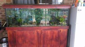 Lge fish tank with fish and all accessories Beenleigh Logan Area Preview