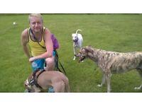 Experienced Dog Walker, Fully insured, £10 per walk