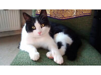 Missing black & white male cat Reward Offered