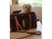 Louis Vuitton dog carrier and matching lead (Genuine bought in Louis Vuitton Edinburgh)