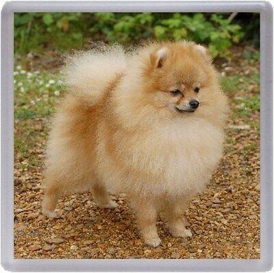 Pomeranian Coaster No 8 by Starprint