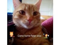 PETER COME HOME