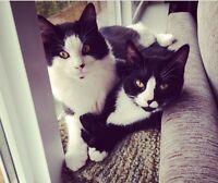 2 loving cats need a family