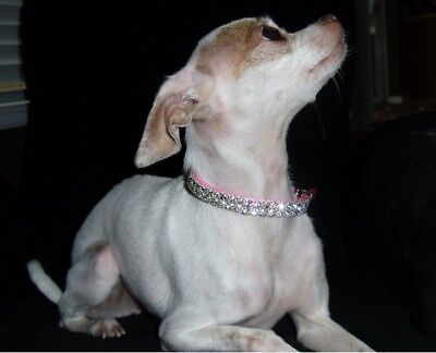 "Blinged Out Pet Pink Swarovski Crystal Rhinestone Dog Collar 8-10""  Or 9-12"""