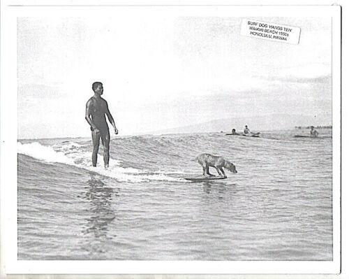 """SURFING DOG, 1950s? WAIKIKI BEACH """"HANGING TEN""""  PHOTOGRAPH ON 8X10"""" MAT"""