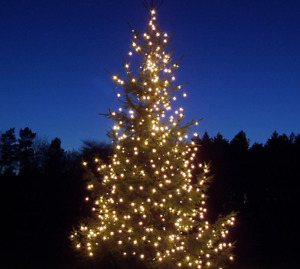 Wholesale Christmas Trees and Ornamental Trees