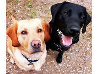 Pet sitting and Dog Walking for Holiday Makers at £10 per day N13 N22 N14 N21 N8 N1 N3