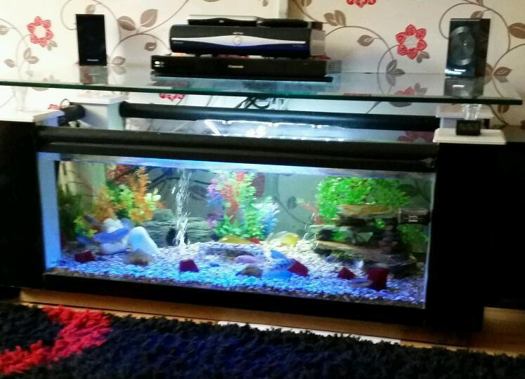 Fish tank tv unit coffee table in swindon wiltshire for Coffee table fish tank for sale