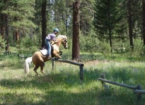 Performance Palomino Pony for Sale