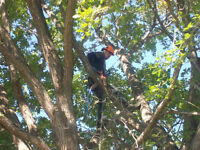 Out On A Limb Tree Care
