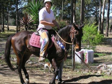 Registered TB Gelding Hillville Greater Taree Area Preview