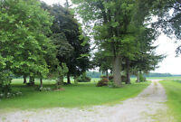 30+ trees for sale perfect for pine boards / lumber / fire wood