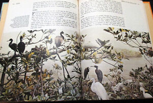Illustrated Library of Nature 12 Volume Set Hardcover – 1971 Stratford Kitchener Area image 8