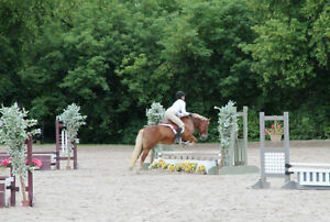 4x/month lessons on a lesson pony, certified coach