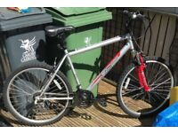 Gents bike (Large)