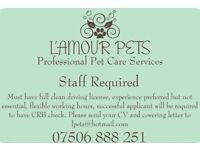 Dog walker/Assistant Required