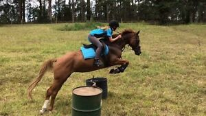 Ultimate ponyclubber or showjumper Port Macquarie Port Macquarie City Preview