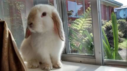 URGENT - Bunny needs holiday home from Tues to Saturday