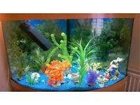 Corner fish tank with fish