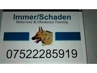 German shepherd Obedience/Behaviour