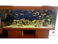 juwel rio 400 complete setup with fish