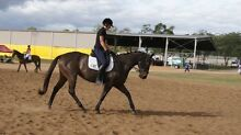 EOI: Thoroughbred mare for lease Coominya Somerset Area Preview