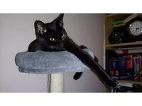 MISSING CATS PORTADOWN KILLICOMAINE AREA