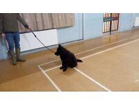 Modern Dog Training Classes