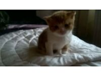 One little playful kitten left and £30 and tht will be 10 deposit and 20 on 28 feb call for moe info