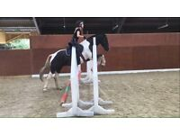 Looking for a rider to share my wonder pony!