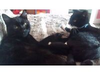 Rehoming Molly and Jasper female and male kitties