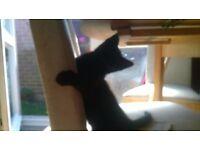 3 balck cat