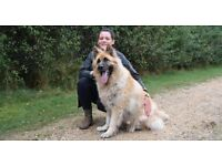 Dog Walking -Worcester Park- Sutton-Epsom-Ewell-Kingstion upon thames-Surbiton-Chessington